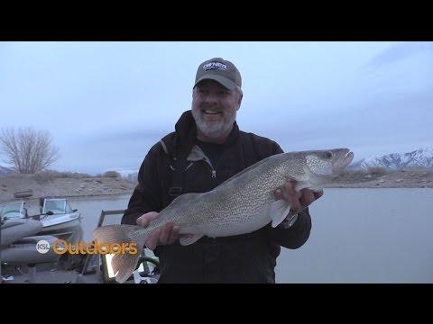Walleye Fishing at Utah Lake