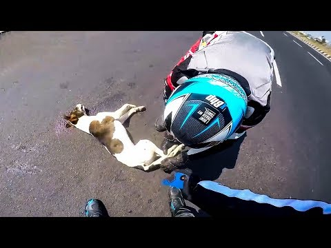 BIKERS TRIED TO SAVE INJURED DOG | BIKERS ARE NICE |  [Ep. #45]