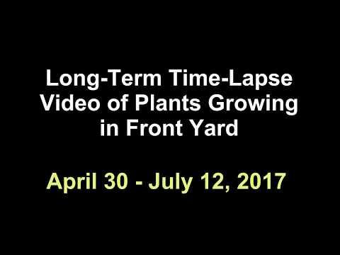Plants Growing: Long-Term Time-Lapse