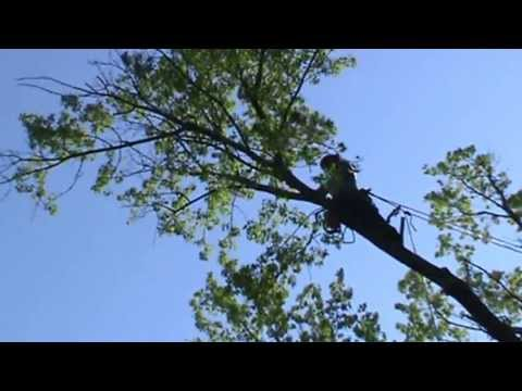 jump cutting a limb out of a tree