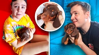 SURPRISING The CLICK Office With NEW PUPPY!