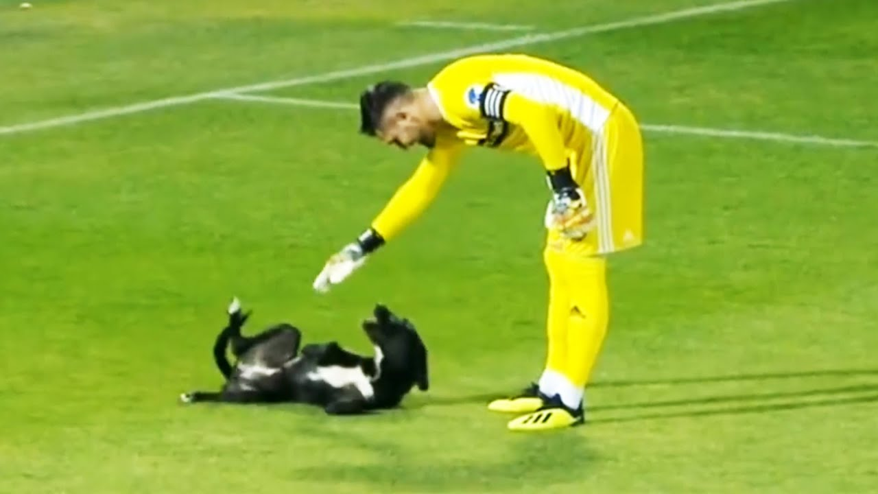 Momentos DIVERTIDOS Con ANIMALES En El Fútbol 🐕