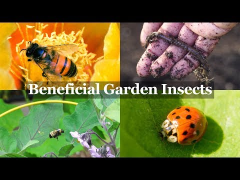 Beneficial Insects You Want in your Garden - The Gardener's Best Friends!