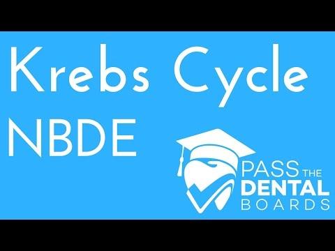 Krebs Cycle - Biochemistry - NBDE