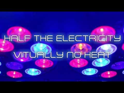 KIND LED VEG Light