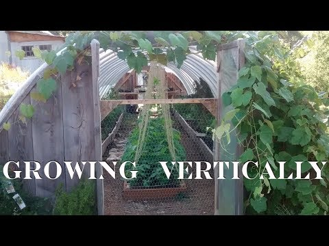 How to Grow Vertically in a Hoop House (Greenhouse or Poly Tunnel)