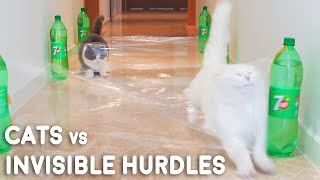 Cats vs Invisible Hurdles