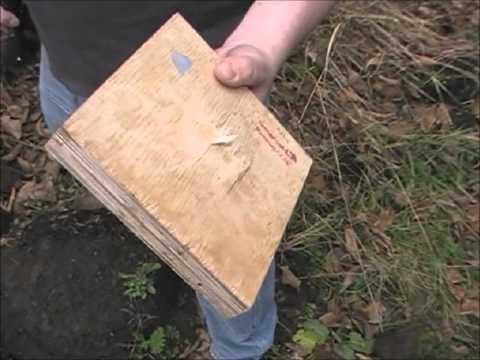 Bulletproof Wood