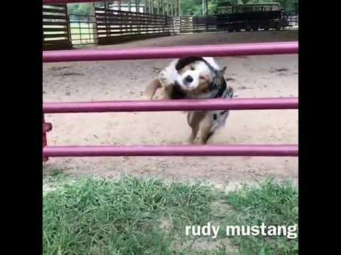 Dog Jumping Through Gate - 979845