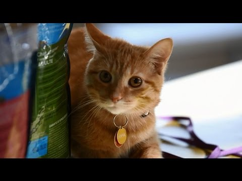 Animal Nutrition with Stacy Lynn Fernandes: Indoor Cats