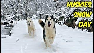 Huskies Snow Day (Then vs Now)