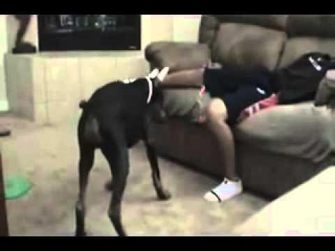 Xxx Mp4 Dog Cach My Xxxx By Muthu Thavalam 3gp Sex