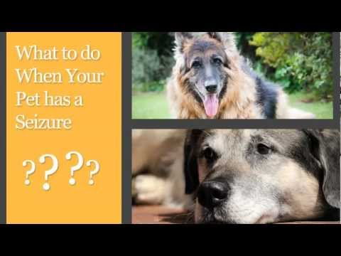 What to Do When Your Pet has a Seizure - 2PetLovers