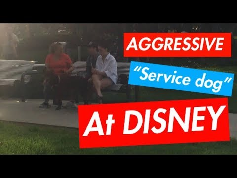 "AGGRESSIVE ""SERVICE DOG"" AT DISNEY"