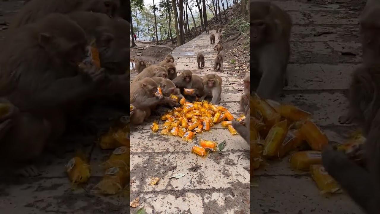 Monkey bread party