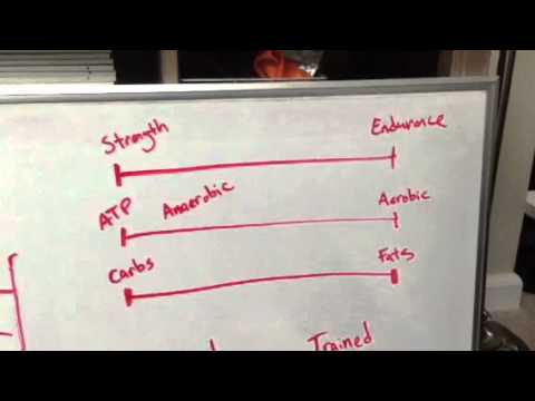 Carb and Fat Usage During Exercise - Rob Medsger - 3STRONG