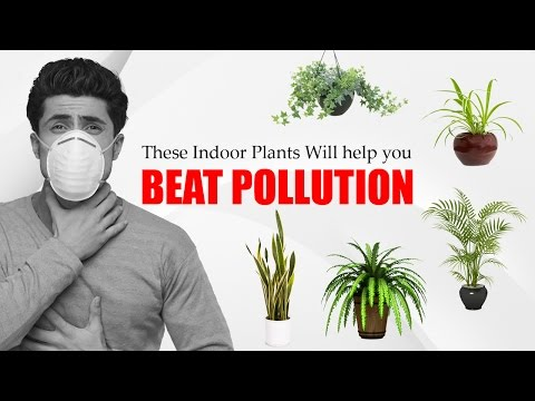 वायु प्रदुषण  Air Pollution Causes & Control at home - Indoor plants curbs pollution | Air pollution