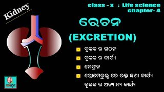 Class 10th Life Science Chapter 4 : Excretion in odia : seek&get
