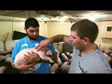 VetsOnCall - Pig epidemic spurs farmer's son to be vet