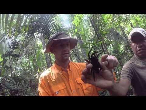 10 Days in BRAZIL - Rio De Janeiro & The Amazon