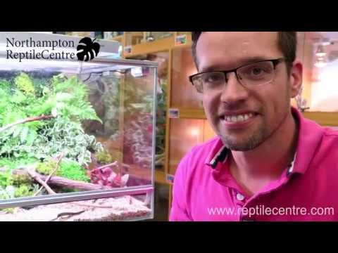 Biopod Terra Terrascaped by George Farmer at Northampton Reptile Centre