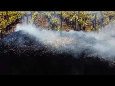 Fighting spring frost in the vineyard with burning hay bales