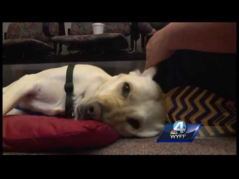 Dog offers comfort to victims, witnesses in courtroom