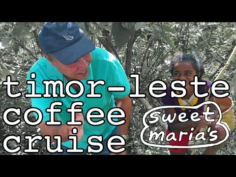 Timor-Leste Coffee Cruise