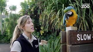 Macaw training session