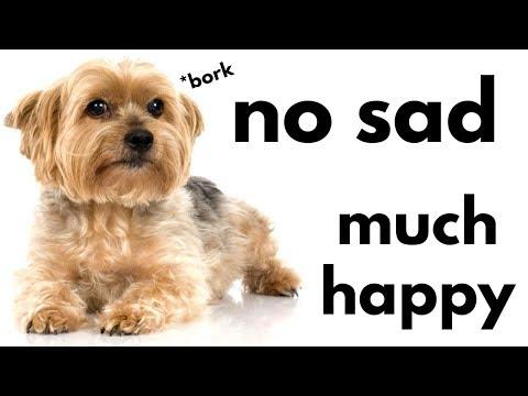 🐶3 Ways to Make Your Puppy Happy 🐶