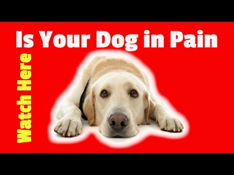 Pain Medication for Dogs Over the Counter