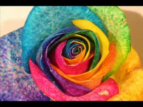 Rainbow Rose Coloring Process by rainbowrosecompany.com