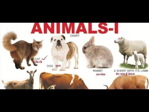 Animals Name For Kids/Children/Baby Study Video 1 In English/Hindi  जानवरों के नाम HD 720p,1080p