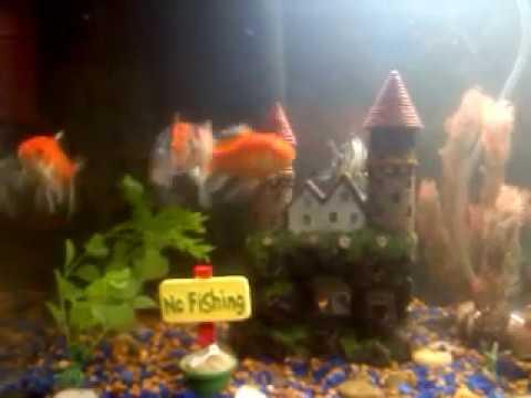 Sick Koi Fish help