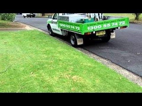 [How To Kill Winter Grass In Lawn] [Wintergrass Control] [How To Kill Winter Grass]