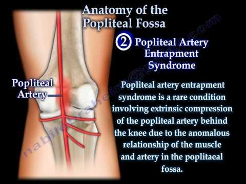Anatomy Of The Popliteal Fossa - Everything You Need To Know - Dr. Nabil Ebraheim