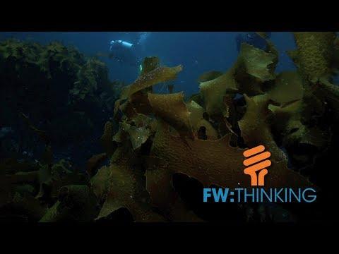 Farming under the sea