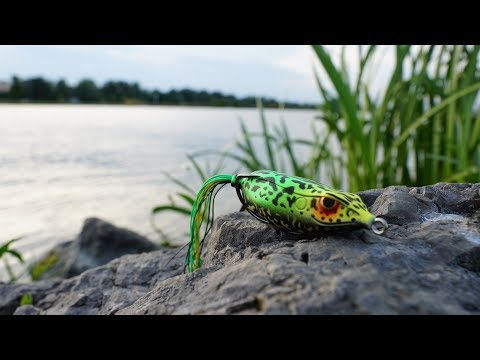 Bank Fishing With a Frog - Everything You Need To Know