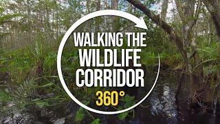 Walking the Florida Wildlife Corridor with Carlton Ward Jr | 360°