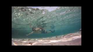 Download Fish Whisperer...follow me fishies, Nalasuan Cebu Philippines Video
