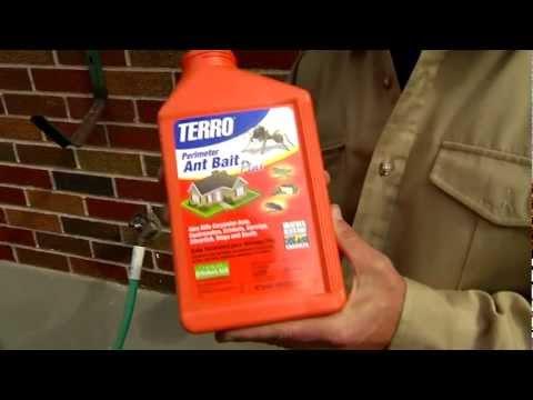 A Killer Way to Kill Ants