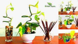 Money Plant Table Arrangement /🌱Money Plant Growing Ideas // GREEN PLANTS