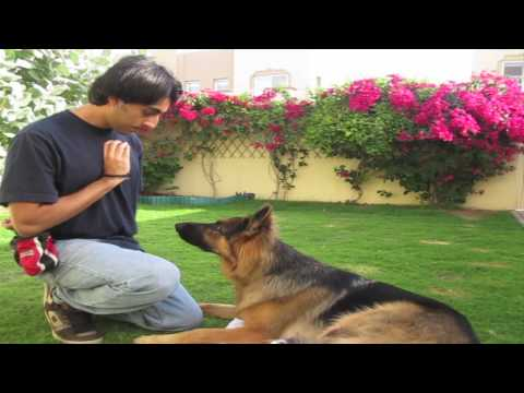 How to teach ANY dog the perfect STAY! (part 1)