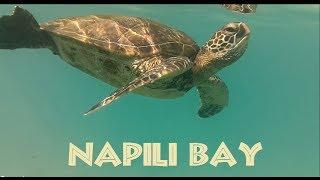 Napili Bay, Maui, Hawaii (Green Sea Turtles)