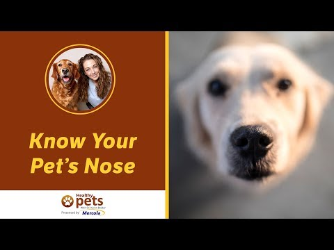 Dr. Becker: Know Your Pet's Nose