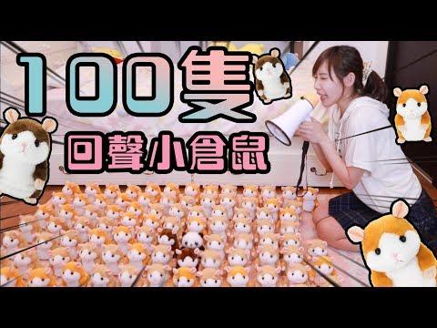倉鼠二週年企劃!能成功讓100隻倉鼠入教嗎?!  安啾 (ゝ∀・) ♡