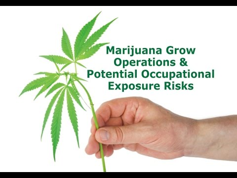 Marijuana Grow Operations & Potential Occupational Exposure Risks