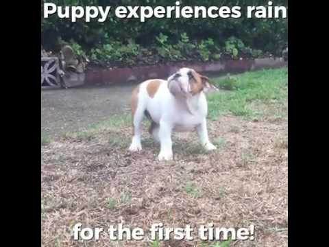 PUPPY FEELS RAIN FOR THE FIRST TIME