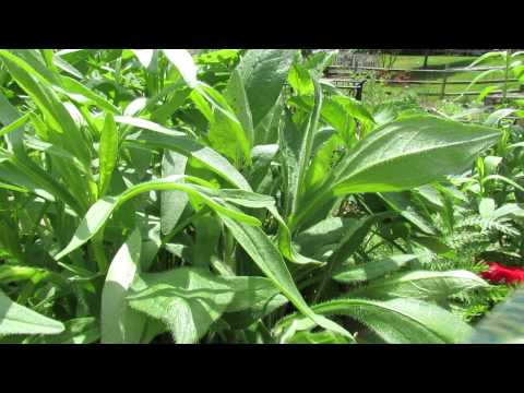 Controlling Soft Bodied Insects/Aphids Using Soapy Water Spray - MFG 2014