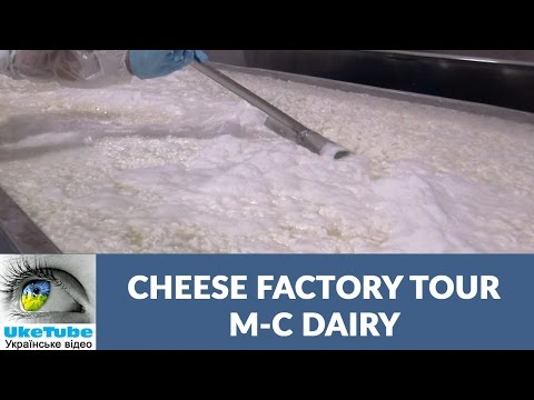 Cheese making M-C Dairy Plant Tour: Cheese, Sour Cream, Kefir, & dairy products
